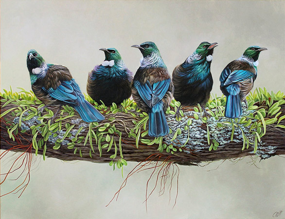 Craig Platt NZ bird artist, oil painting, Tui